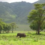 The elephants are intelligent creatures with complex consciousness and strong emotions