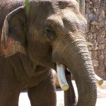 Across Africa the elephants have inspired respect from the people