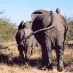Across Africa the elephants has inspired respect from the people