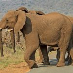 Across Africa an elephant has inspired respect from people that share the landscape