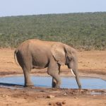 Elephants live in family groups