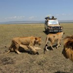 Game drives take you to the wildlife rich spots