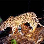 http://www.africanspicesafaris.com/nairobi_night_game_drive_safari_kenya.html