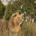 http://www.wheelsonourfeet.com/2015/05/04/full-day-safari-in-maasai-mara-kenya/
