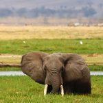 http://kilimakenyatravels.com/5-days-tsavo-east-west-amboseli-saltlick/