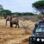 https://www.mangoafricansafaris.com/masai-mara-national-reserve/karen-blixen-camp