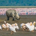 http://fareshoppe.com/kenya_safari.php