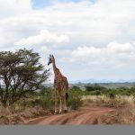 http://cooksipgo.com/lions-rhinos-nairobi/