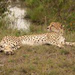 http://www.wheelsonourfeet.com/category/travel/kenya/masai-mara/