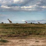 http://www.leeabbamonte.com/africa/fairmont-mount-kenya-safari-club.html