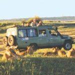 http://www.brunomombasasafaris.com/8_days_kenya_and_tanzania_combined_safari_from_mombasa.htm