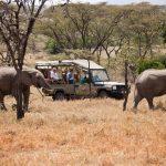 https://cruzeiro-safaris.com/kenya-zanzibar