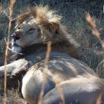 http://www.ivanhenares.com/2015/10/kenya-safari-tour-maasai-mara.html