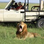 http://bushtopscamps.com/mara/game-drives/day-game-drives/