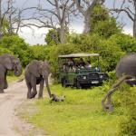 http://www.zicasso.com/luxury-vacation-kenya-tours/kenya-safari-vacation-game-drives-famous-national-parks