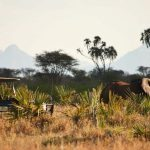 http://www.classicsafariafrica.com/blog/2015/02/its-the-personal-experience-that-counts-at-elsas-camp-kenya/