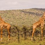 https://www.turquoiseholidays.co.uk/blog/take-the-kids-on-safari-in-kenya-for-may-half-term/