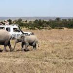 http://www.kenya-information-guide.com/kenya-national-parks.html