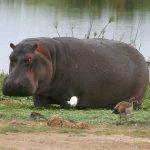 https://www.olx.co.ke/ad/best-nairobi-kenya-day-trip-one-day-amboseli-nakuru-game-drive-safari-IDTEMtG.html