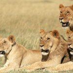 http://www.ewamannssafaris.com/joomla/index.php/homepage/2-2015-07-06-13-23-15/94-7-days-masai-mara-lake-nakuru-and-samburu-safari-2