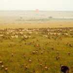 There is no way of telling how many animals you will see during the balloon ride as the animals move around the 580 mi2 of the Maasai Mara at will
