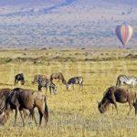 http://www.fotolibra.com/gallery/697666/barrage-balloon/like/
