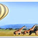 http://www.nappetafrica.com/index.php/safaris-tour-packages/exercutive-safari-packages