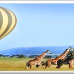 http://www.nappetafrica.com/index.php/safaris-tour-packages/exercutive-safari-packages