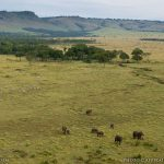 https://www.safaribookings.com/kenya/wet-season-photos