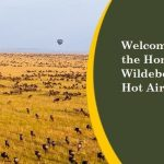 http://www.kenyatoursandsafaris.com/index.php/kenya-safaris?layout=edit&id=98