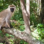 Wilidlife safaris form Kenya's largest chunk of national revenue