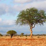 Meat-eating ceremony is known as Enkang oo-nkiri in Masai language