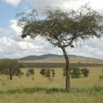 Masai's distinctive culture has made them one of Kenya's most internationally famous tourist attractions