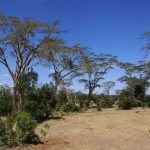The Maasais reside in both Kenya and Tanzania
