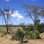 The Maasai reside in both Kenya and Tanzania