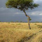 Maasais reside in both Tanzania and Kenya