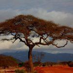 The Maasai live along the border of Kenya and Tanzania
