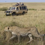 Game drives give you the opportunity to spot wild animals in their natural habitat