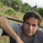 Adult male elephants spend their time in single-sex groups or alone