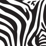 When zebras move the stripes confuse biting insects and predators