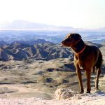 Dog and African wilderness