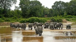 Inyati game lodge - sabi sand - elephants in river