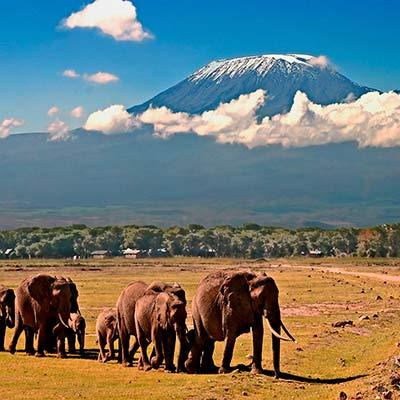 guide photo safari photo - famille d'éléphants devant le Klimandjaro au Kenya