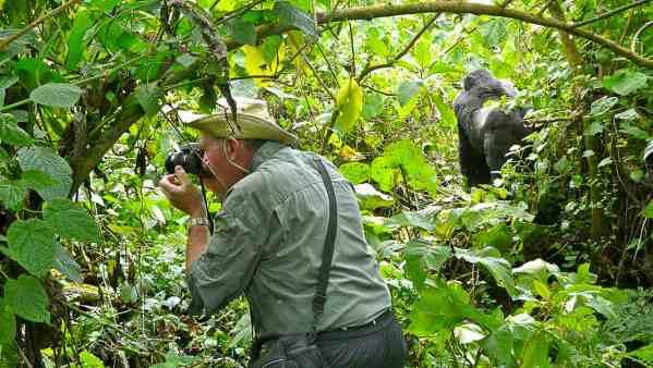 Gorilles de montagnes au Rwanda - guide photos safari photo