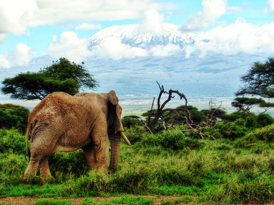 Amboseli National Park /Picture courtesy of KWS