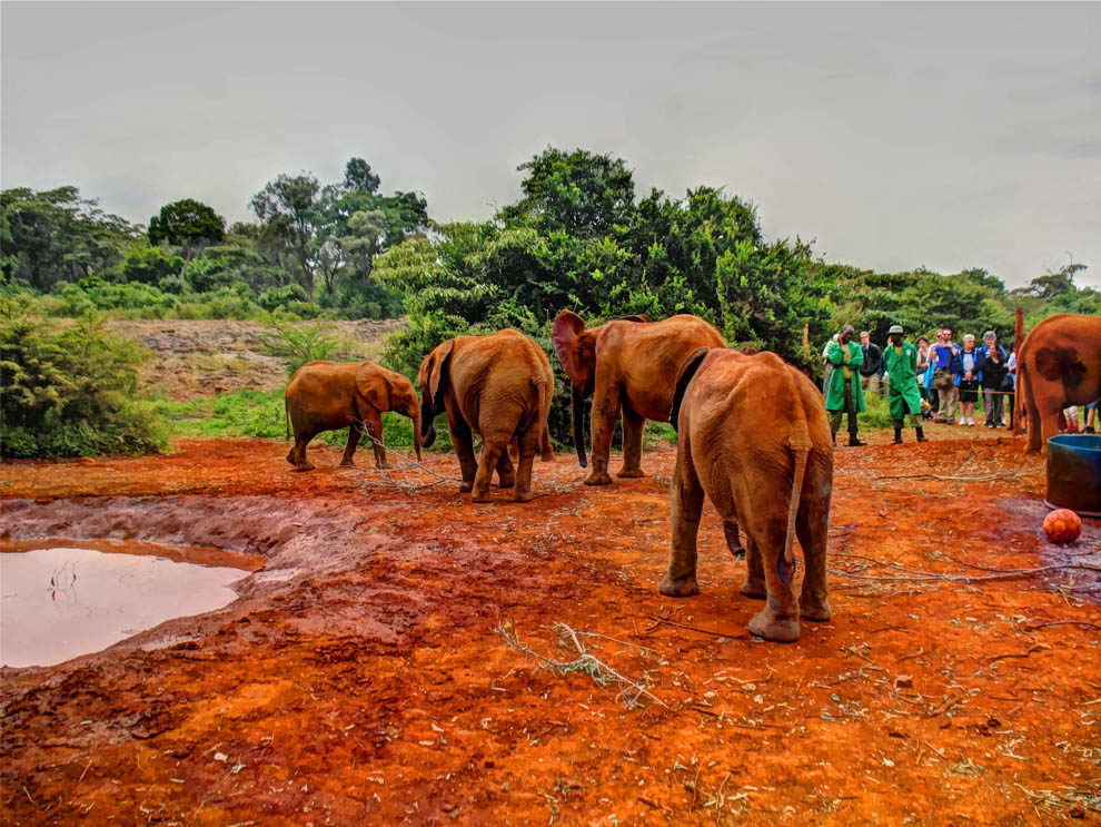 David_Sheldrick_going