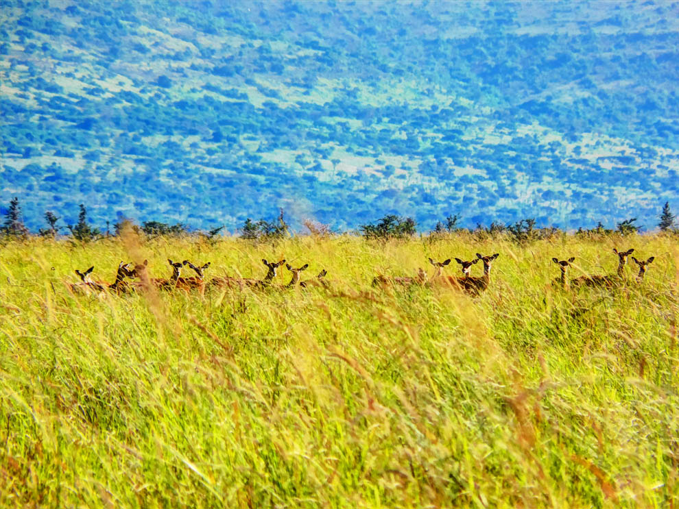 Ruma National Park_rolling grasslands