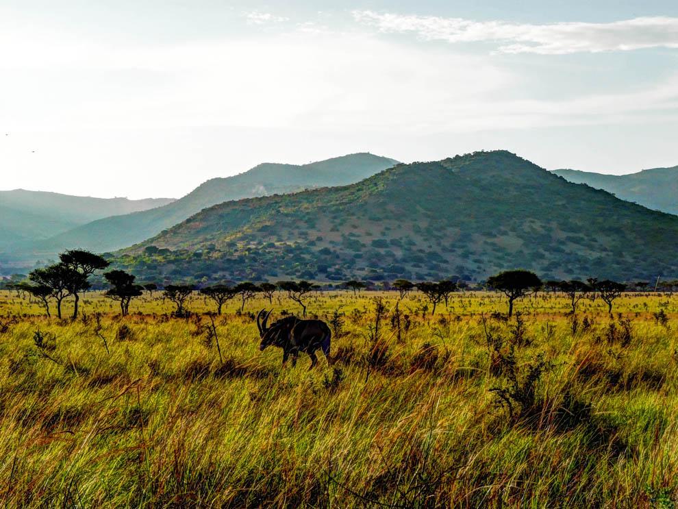 Ruma National Park_rolling hills