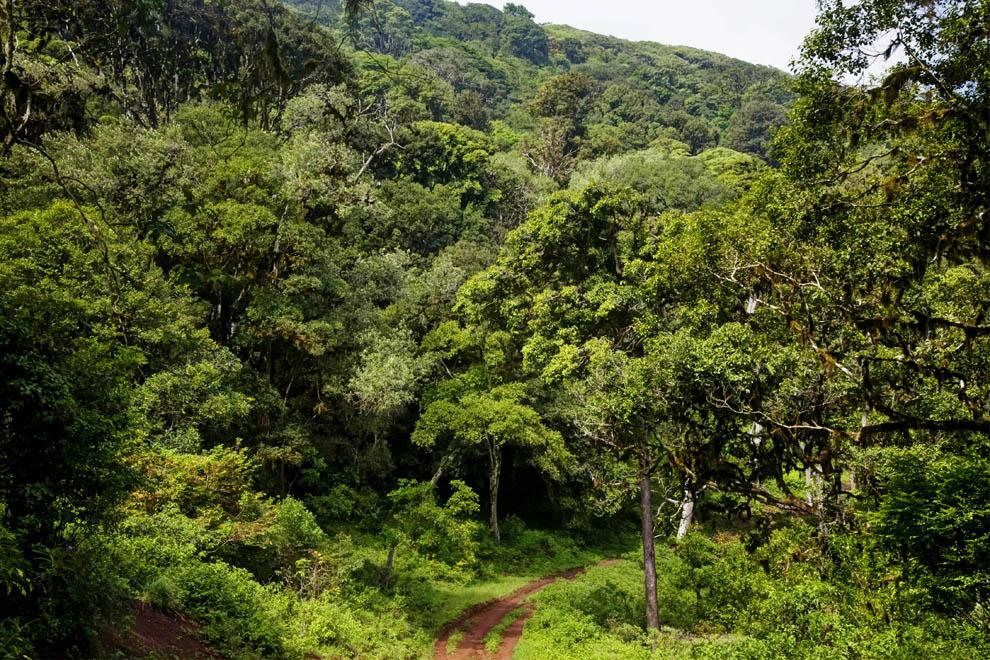 Forest Marsabit N.P. Kenya