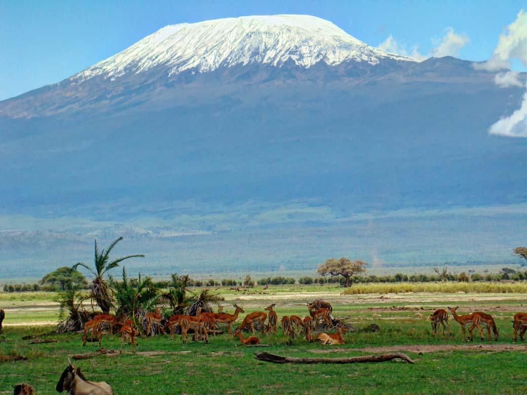 Amboseli National Park_Gazelle against Kilimanjaro